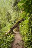 Ecological path in Ecuador Stock Images