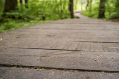 Ecological path from wooden boards for walking in the forest wit. H an unsharp background. Summer day, close-up Stock Photo