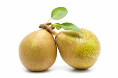 Free Ecological Pears Stock Images - 16461664