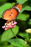 Ecological photography butterfly Stock Photo