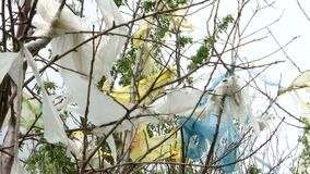 Nature pollution, plastic bags on trees. Ecological pollution, torn plastic bags on trees stock video footage