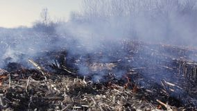 Nature damage ecological environmental destruction. Ecological problem, environmental protection concept. Burning out corn field close up, smoke and fire in stock footage