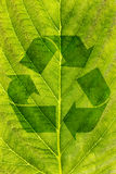 Ecological recycling concept Stock Image