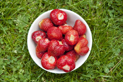 Ecological strawberries Royalty Free Stock Photos