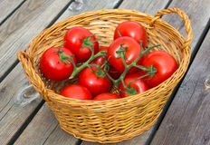 Ecological Tomatoes. Photograph of ecological tomatoes placed in a wooden basket Royalty Free Stock Photos