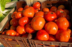 Ecological tomatoes Royalty Free Stock Image