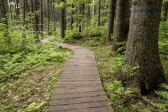 Ecological trail made of wooden planks to walk in forest, in the Royalty Free Stock Images