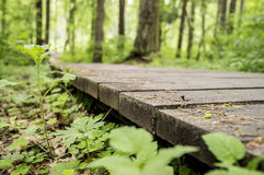 Ecological trail made of wooden planks for walking in the woods. Stock Image