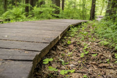 Ecological trail made of wooden planks for walking in the woods. Stock Photos