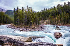 The ecological trip to Canada. The concept of extreme tourism. Small island in emerald waters of the river. The bear passes the rough river Royalty Free Stock Photos
