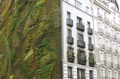 Ecological urban construction. wall of plants royalty free stock images