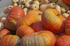 Ecologically Clean. Pumpkins on sale royalty free stock photography