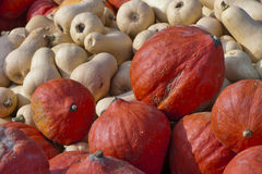 Ecologically Clean. Pumpkins on sale stock photography