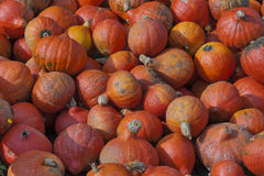 Ecologically Clean. Pumpkins on sale royalty free stock image