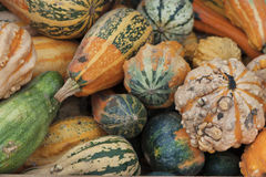 Ecologically Clean. Pumpkins on sale royalty free stock photo
