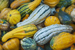 Ecologically Clean. Pumpkins on sale royalty free stock photos