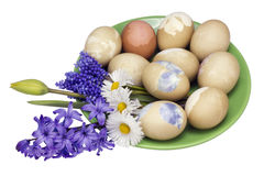 Ecologically Easter eggs Stock Photography