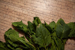 Ecologically pure spinach Stock Photography