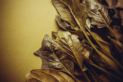 Ecologically pure spinach Stock Images