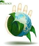 Ecologie Royalty-vrije Stock Fotografie