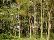 Ecologie Royalty-vrije Stock Afbeelding