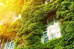 Ecologie-vriendschappelijk huis Royalty-vrije Stock Foto