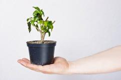 Ecologieconcept Stock Afbeeldingen