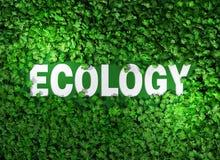 Ecologiewoord onder het gras Stock Fotografie