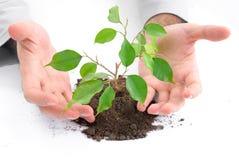 Ecologisch concept. stock afbeeldingen