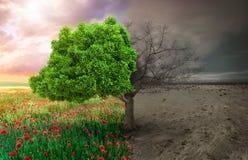 Ecologisch concept met boom en klimaat veranderend landschap stock foto's