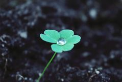 Ecologisch en milieubewustzijn De natuurlijke het levensgroei Royalty-vrije Stock Fotografie