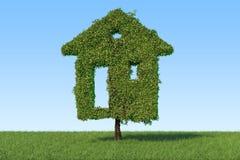 Ecologisch huisconcept Boom in de vorm van huis op green Stock Foto