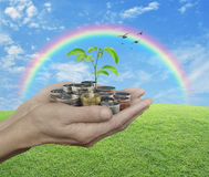 Ecologisch investeringsconcept Royalty-vrije Stock Foto