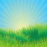 Ecologische achtergrond Stock Afbeeldingen