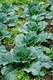 Ecologische boomgaard Royalty-vrije Stock Foto's