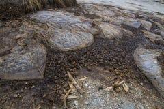 Ecologische catastrofe: skeletten in plastic zakken op de kust stock foto