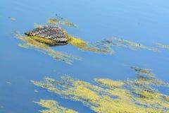ecologische crisisfoto Huisvuil in het water Royalty-vrije Stock Foto's