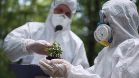 Ecologist do the analysis of a plant Stock Photos