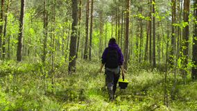 The ecologist going to the place of research. The woman ecologist with toolbox in her hands going to the place of research in the forest at summer day. Rear stock footage