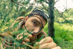 Ecologist with magnifying glass next to pine Stock Images
