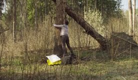 Ecologist measuring damage tree. Ecologist in the forest measuring damage tree. Save nature concept royalty free stock photography