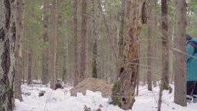 Ecologist twee in het bos stock video