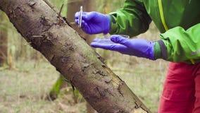 Ecologista del científico en el bosque que recoge muestras de plantas almacen de video