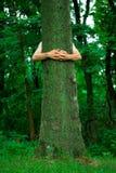 Ecologista del hugger del árbol imagen de archivo libre de regalías