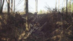 Ecologista en la tala del bosque Registros descargados almacen de video
