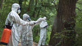Ecologistas que aplicam o tratamento na árvore Fotografia de Stock Royalty Free