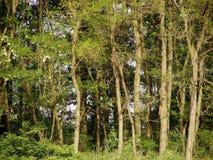 Ecology Royalty Free Stock Image