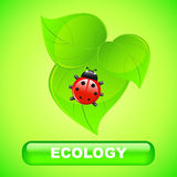 Ecology background Royalty Free Stock Images