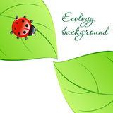 Ecology background Royalty Free Stock Photography