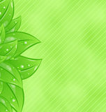 Ecology background with eco green leaves Royalty Free Stock Photos